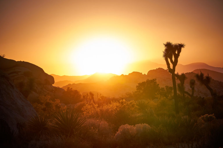 Joshua Tree Nationalpark - Sonnenuntergang